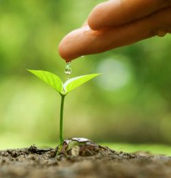 SVSR - Hand nurturing and watering a young plant