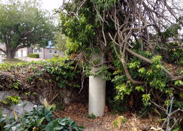Old vent shaft surrounded by plants