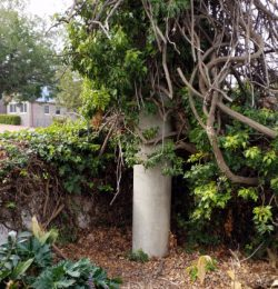 Sewer Vent surrounded by plants and leaves
